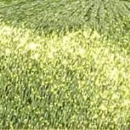 salg af Lurex Glimmer Garn Lys Grøn